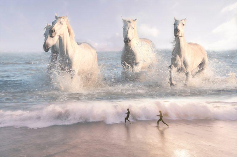 chevaux cheval mer surf imagination