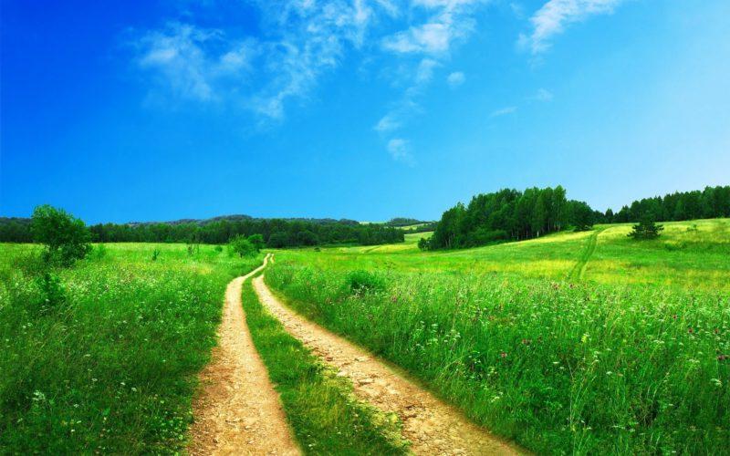 nature chemin vert joie bonheur repos paix détente stress